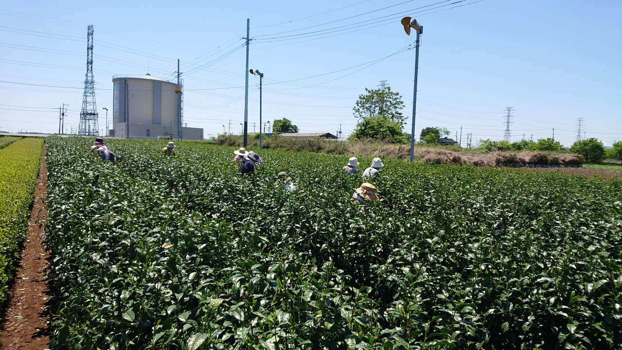 茶畑、製茶工場の見学ができる三ツ木園製茶のグリーンツーリズム